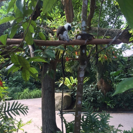 Tropical moments at the Singapore Zoo