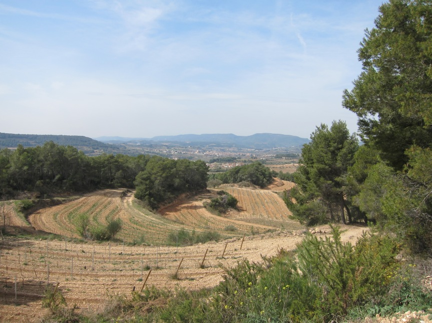 The beautiful vineyards of Castellroig