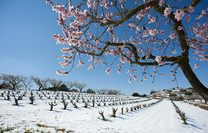 The vineyard in the winter