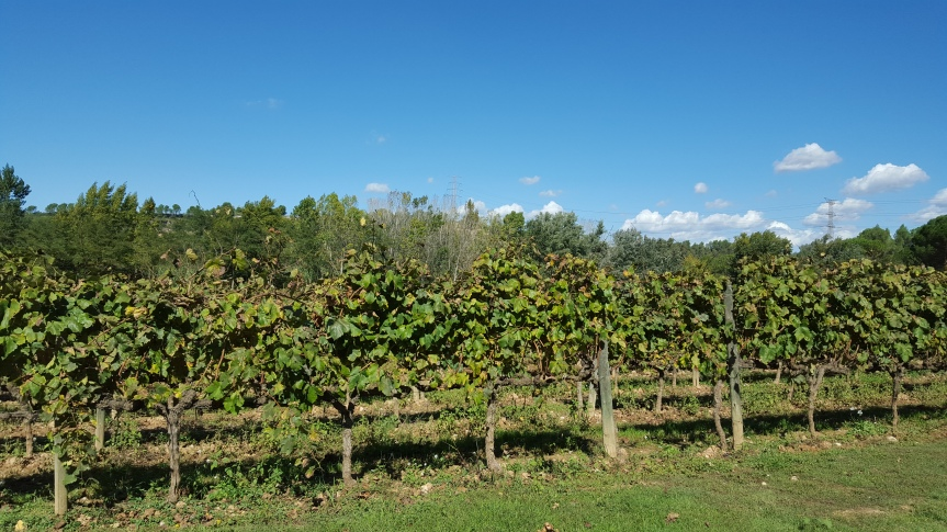 A glimpse at the vineyards