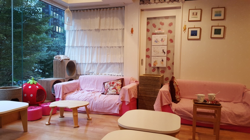 Visiting a cat café in Shibuya
