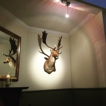 A deer head on the wall of Harwood Arms