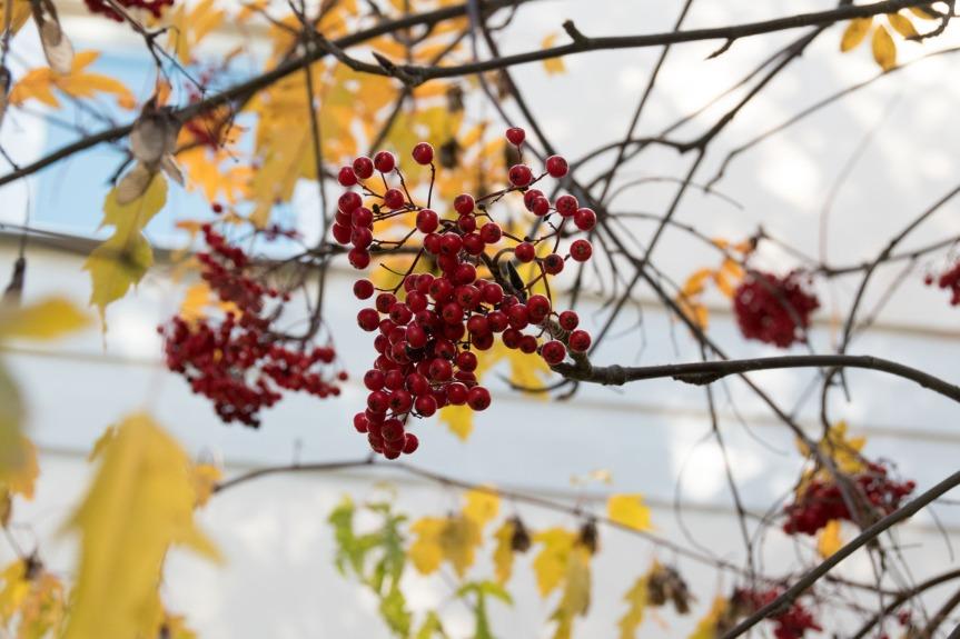 Wineweek 155: Gin andTonic