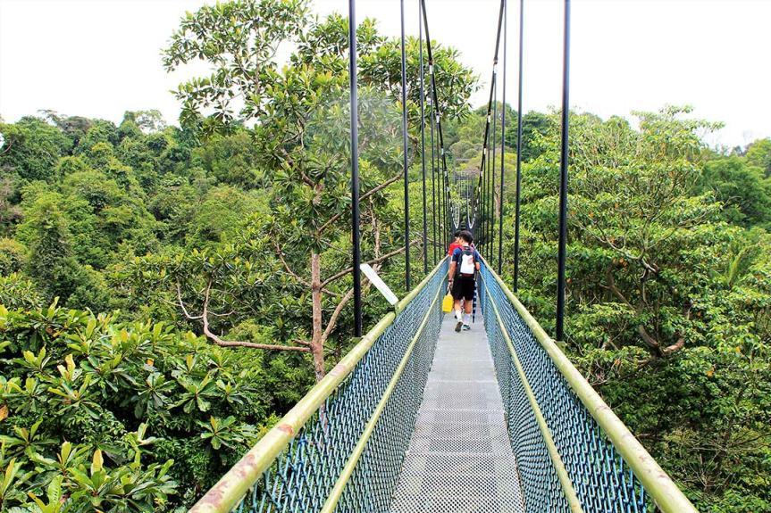 HSBC-tree-top-walk